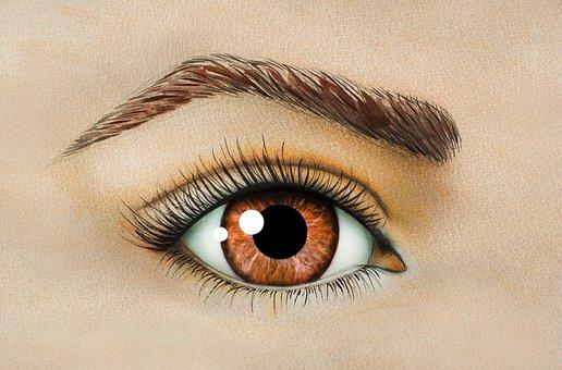 Eye, Brown Eyes, Eyebrow, Eyelashes, Beauty, Woman
