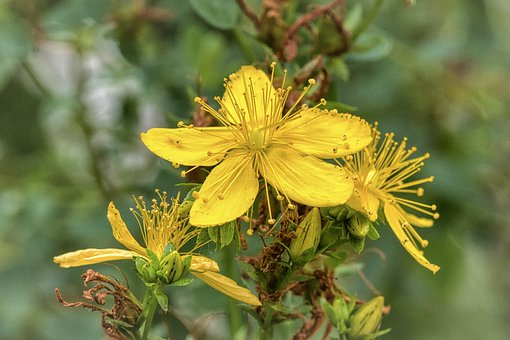 Flower, Petals, Blossom, Bloom, Bee Pollen, Seeds