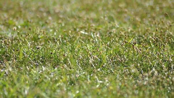 Grass, Field, Nature, Outdoors, Green, Environment