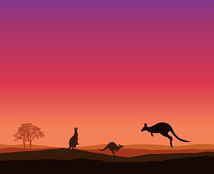 Kangaroo, Sunset, Trees, Animal, Landscape, Nature, Sky