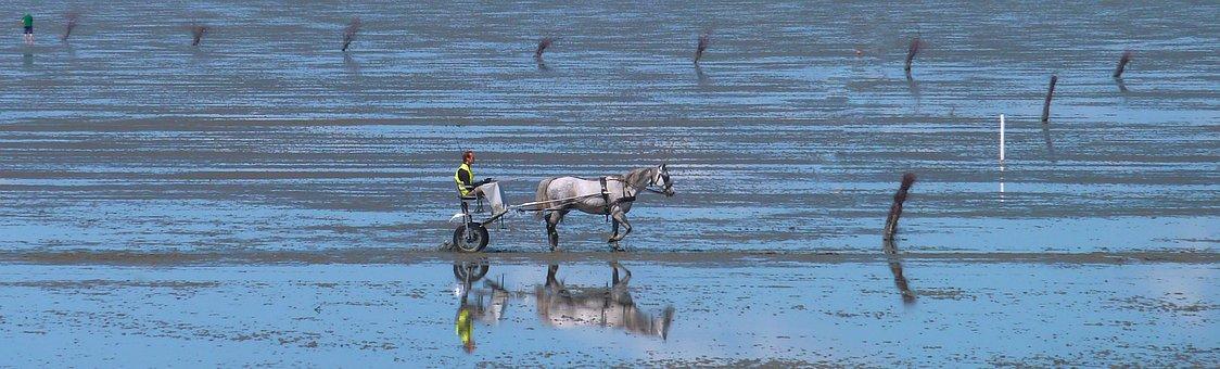 Ride, Sulky, Horse, Water, Sea, Nature, Beach