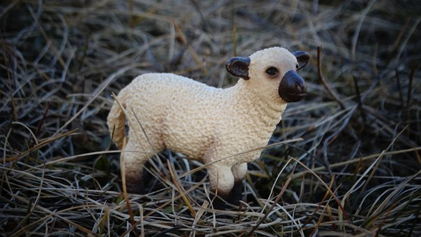 Lamb, Sheep, Farm, Schleichtier, Toy, Figurine