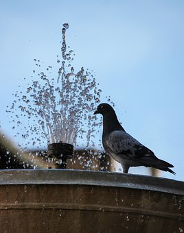 Gush, Water, Fountain, Refreshing, Pigeon, Perched