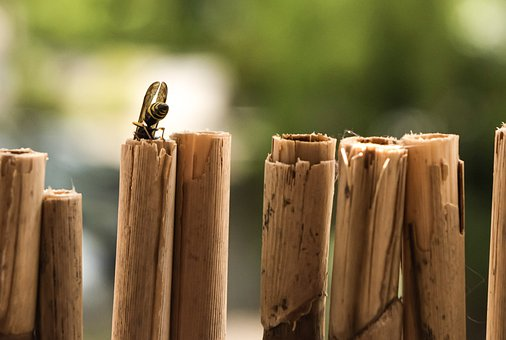 Wasp, Wings, Bamboo, Insect, Bug, Nature, Immersion