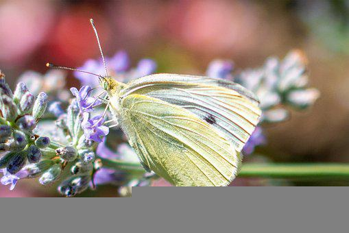 Butterfly, Flower, Insect, Flora, Plant, Nature