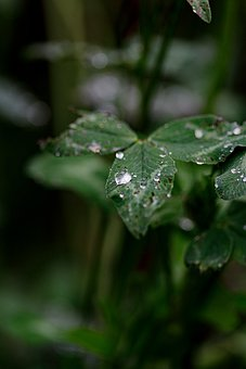 Raindrops, Dew Drops, Rainy, Water, Wet, Plants, Leaves