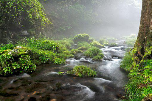 Brook, River, Water, Fog, Mist, Rock, Moss, Arboretum