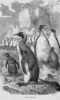 Giant Penguin, Bird, Avian, Animals, Wildlife