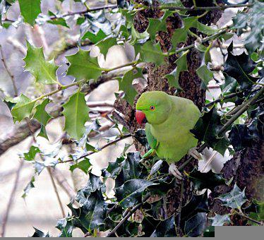 Parakeet, Bird, Colorful, Garden, Nature