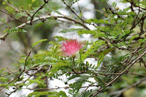 Flower, Brush Flower, Flores, Nature, Floral, Garden