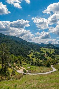 Tara Mountain, Trees, Woods, Forest, Mountains