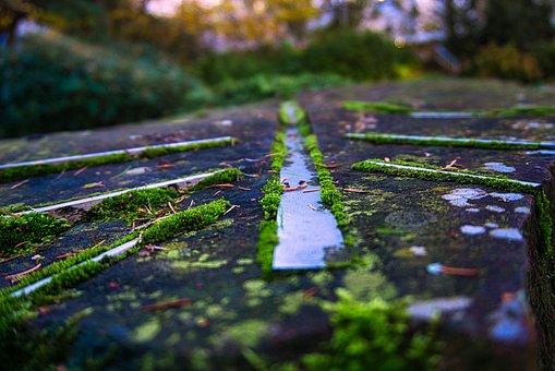 Moss, Stone, Nature, Rock, Art, Line