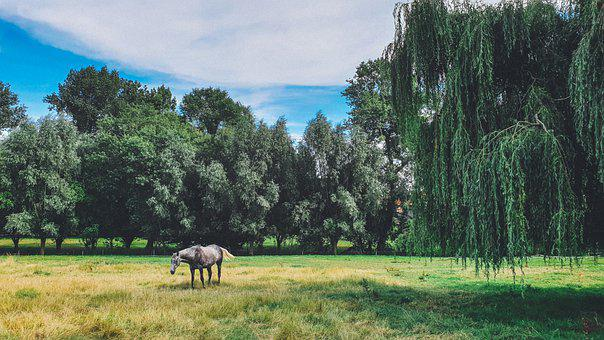 Horse, Equine, Equestrian, Pasture, Meadow, Rural