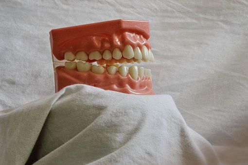 Teeth, Tooth, Dental, Dental Model, Mouth Model
