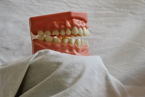 Teeth, Tooth, Dental, Dental Model, Mouth Model