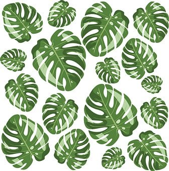 Leaf, Monstera, Monstera Leaf, Sheet, Tropical, Exotic