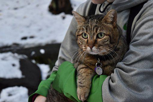 Cat, Winter, Snow, Kitten, Cute, Fur, Animal, Cold, Pet