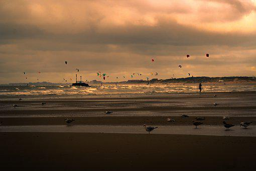 Kites, Windsurfing, Ocean, Sport, Water, Beach