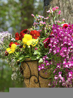 Flowers, Petals, Bouquet, Floral Arrangement, Floral