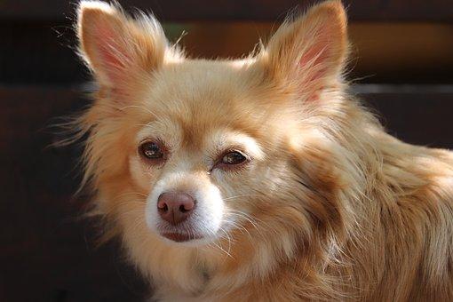 Dog, Puppy, Pet, Animal, Cute, Furry, Canine, Fauna