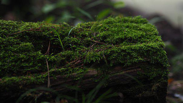 Moss, Forest, Woods, Nature, Greenery, Leaves, Plants