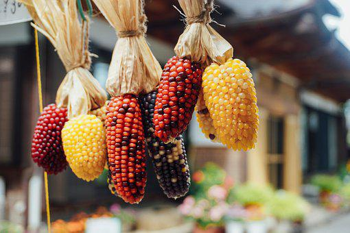 Corn, Fresh, Grain, Cereal, Food, Healthy, Agriculture