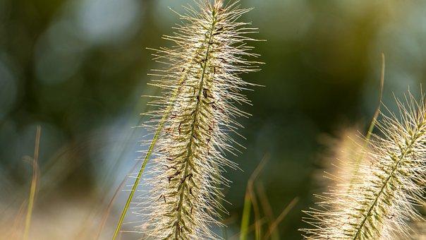 Plants, Grass, Flowers, Weeds, Halm, Garden, Nature