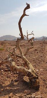Desert, Israel, Negev, Dead Tree, Dead Wood, Branch