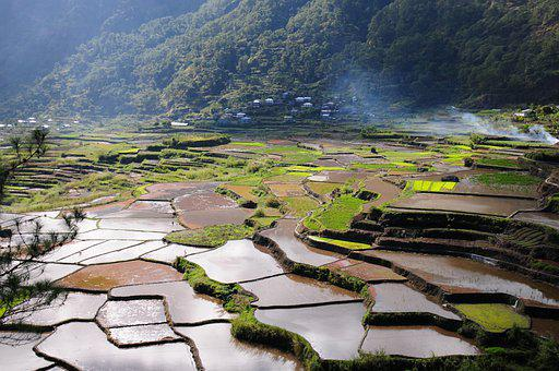 Rice Field, Rice Terraces, Landscape, Field, Farm