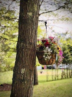 Tree, Bark, Flowers, Pot, Plants, Decorative
