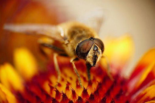 Wasp, Blossom, Bloom, Pollen, Pollination, Insect