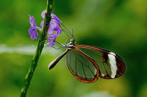 Butterfly, Insect, Nature, Animal, Wing, Flower