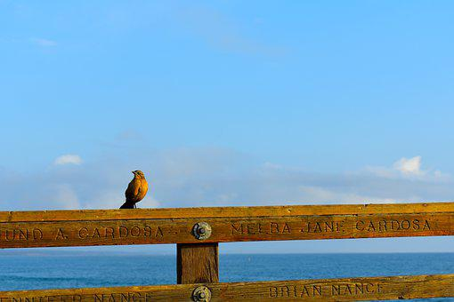 Bird, Fence, Beach, Ocean, Sea, Landscape, Water
