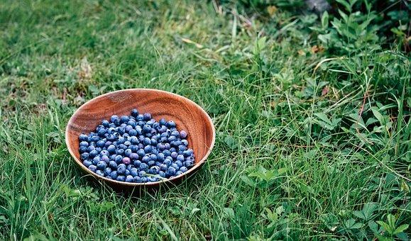 Blueberries, Blueberry Bush, Fruits, Wooden Bowl, Bowl