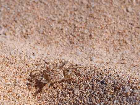 Crab, Sand, Beach, Shore, Seashore, Coast, Crustacean