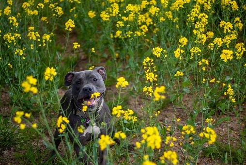 Dog, Canine, Hund, Pet, Domestic, Flowers, Meadow