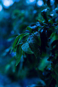 Leaves, Raindrops, Drops, Droplets, Wet, Damp, Plant