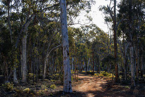 Dryandra Woodlands, Forest, Nature, Trees, Woods