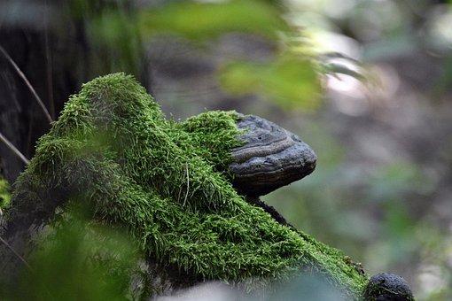 Moss, Mossy, Mushroom, Fungi, Fungus, Tree, Forest