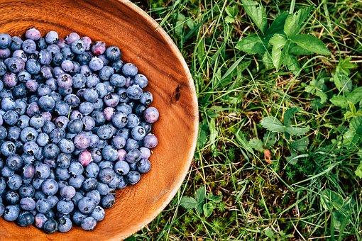 Blueberries, Fruits, Berries, Ripe, Foliage