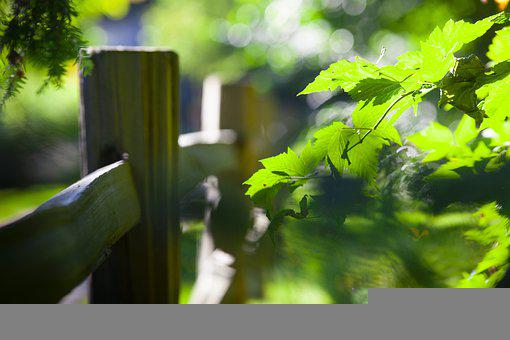 Leaves, Foliage, Plants, Fence, Park, Garden, Nature