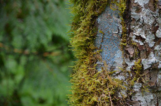 Tree, Trunk, Moss, Wood, Lichens, Fungus, Greenery