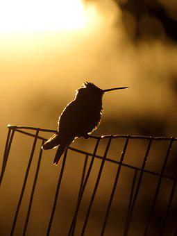 Hummingbird, Silhouette, Bird, Nature, Wildlife, Animal