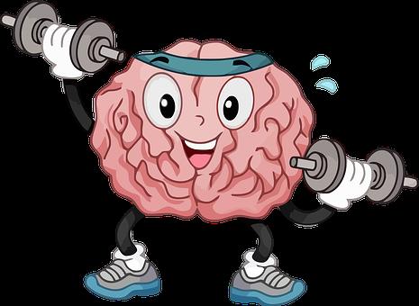 Brain, Organ, Muscle, Body, Mind, Intelligence