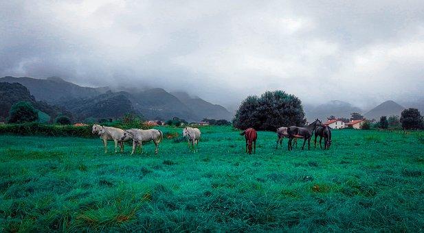 Horses, Animals, Pasture, Pastureland, Pasturage, Field