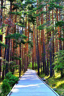 Trees, Path, Forest, Park, Wooden Path, Pathway