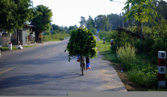 Road, Bike, People, Countryside, Nature, Work