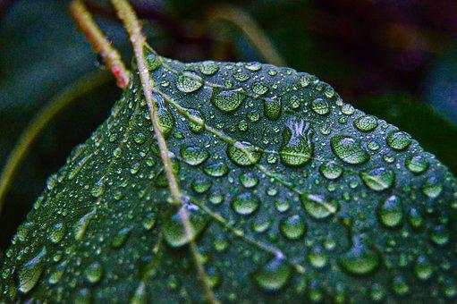 Leaf, Dew Drops, Raindrops, Water Droplets, Wet, Plant