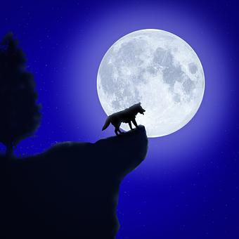 Wolf, Moon, Cliff, Rock, Tree, Animal, Wild, Wildlife