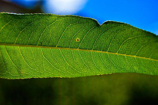 Leaf, Close Up, Sheet, Green, Nature, Flora, Botany